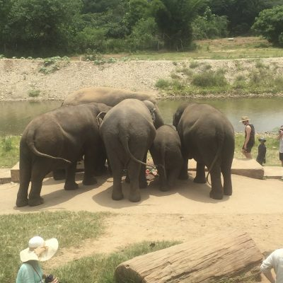 Volunteering with elephants in Northern Thailand